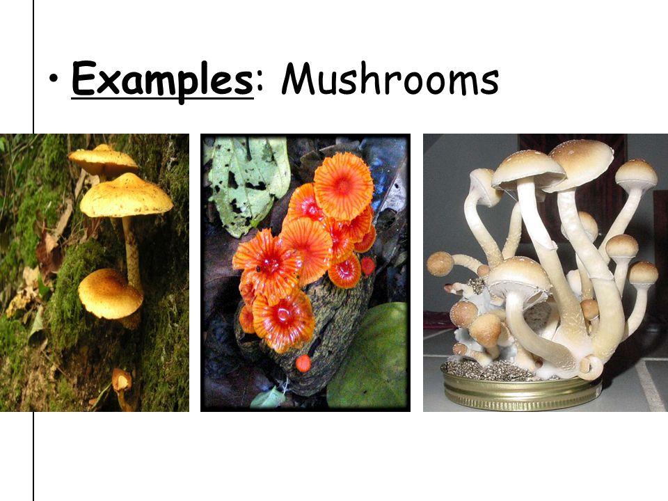 Examples: Mushrooms