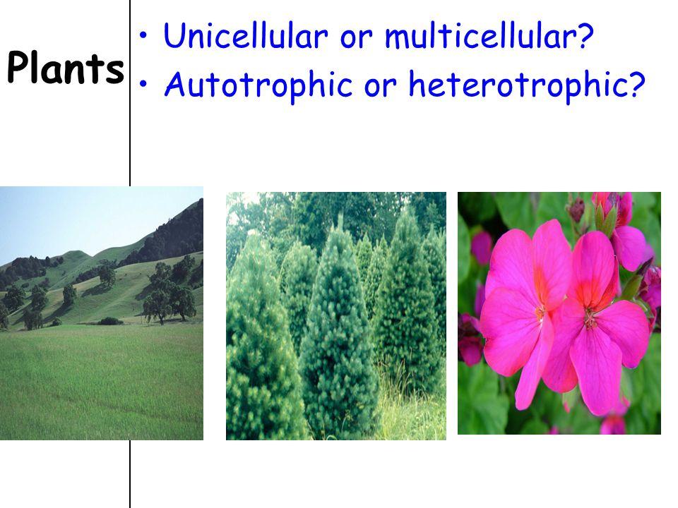 Plants Unicellular or multicellular? Autotrophic or heterotrophic?