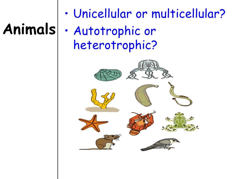 Animals Unicellular or multicellular? Autotrophic or heterotrophic?