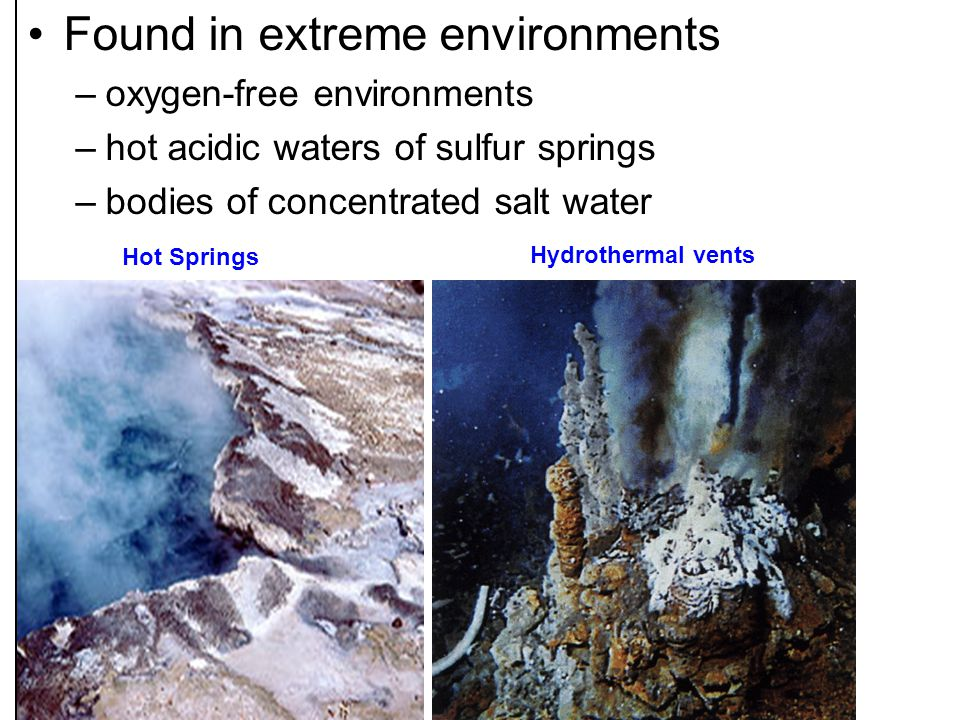 The hot springs of Yellowstone National Park, USA, were among the first places Archaebacteria were discovered.