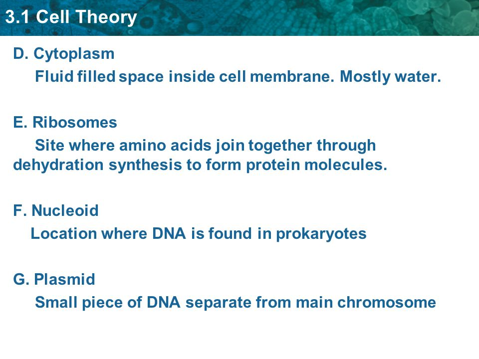 3.1 Cell Theory D. Cytoplasm Fluid filled space inside cell membrane.