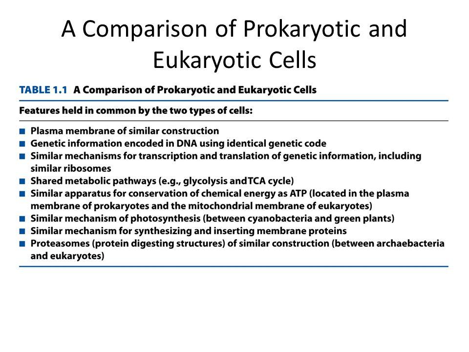 A Comparison of Prokaryotic and Eukaryotic Cells