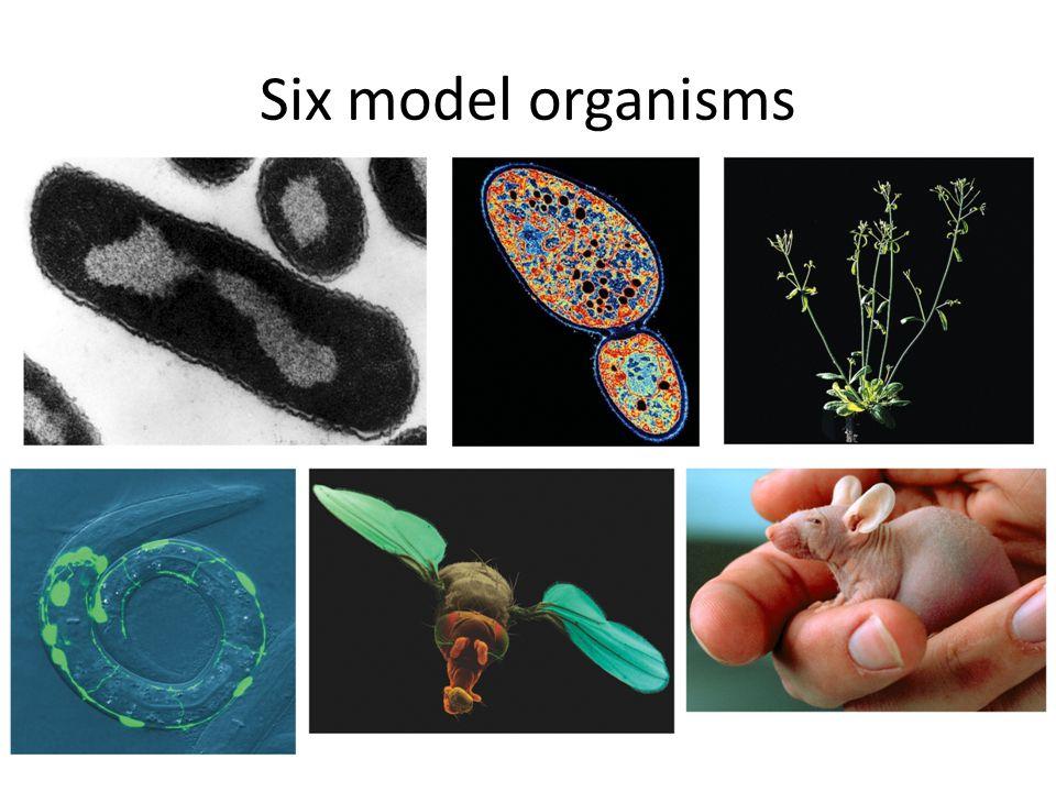 Six model organisms