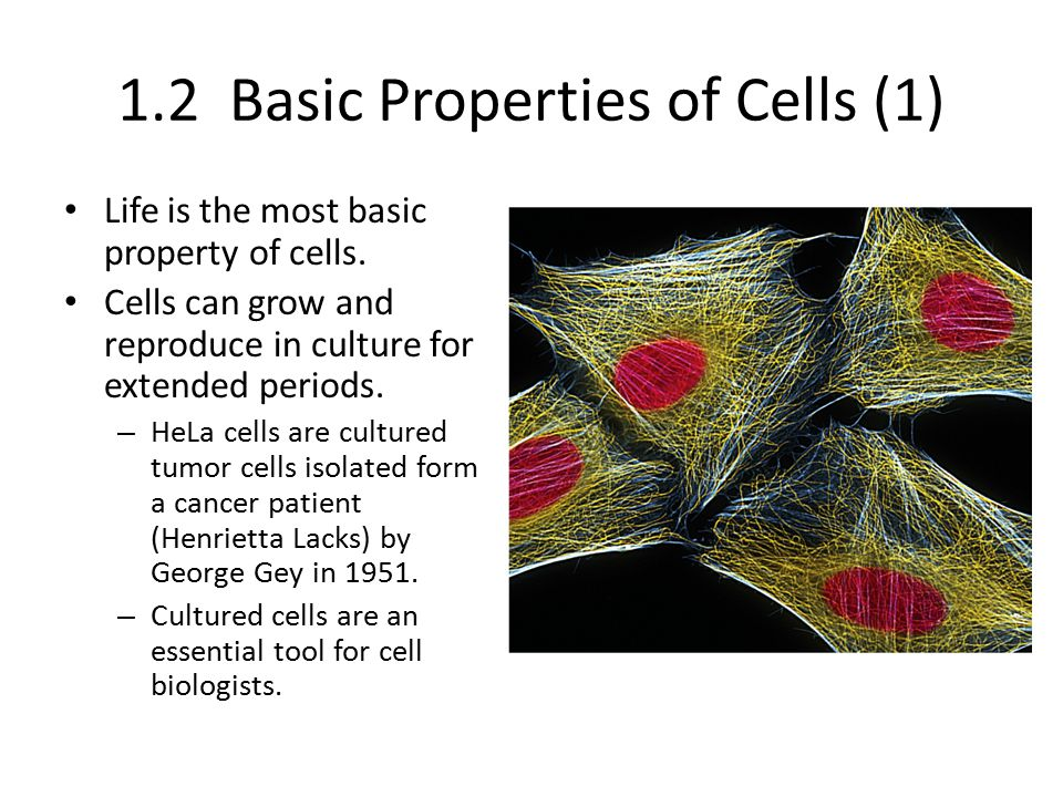 1.2 Basic Properties of Cells (1) Life is the most basic property of cells. Cells can grow and reproduce in culture for extended periods. – HeLa cells