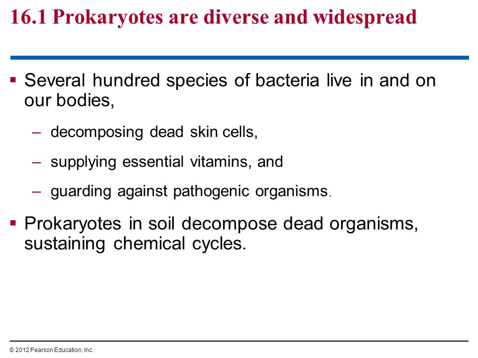  Prokaryotic decomposers are the mainstays of sewage treatment facilities.
