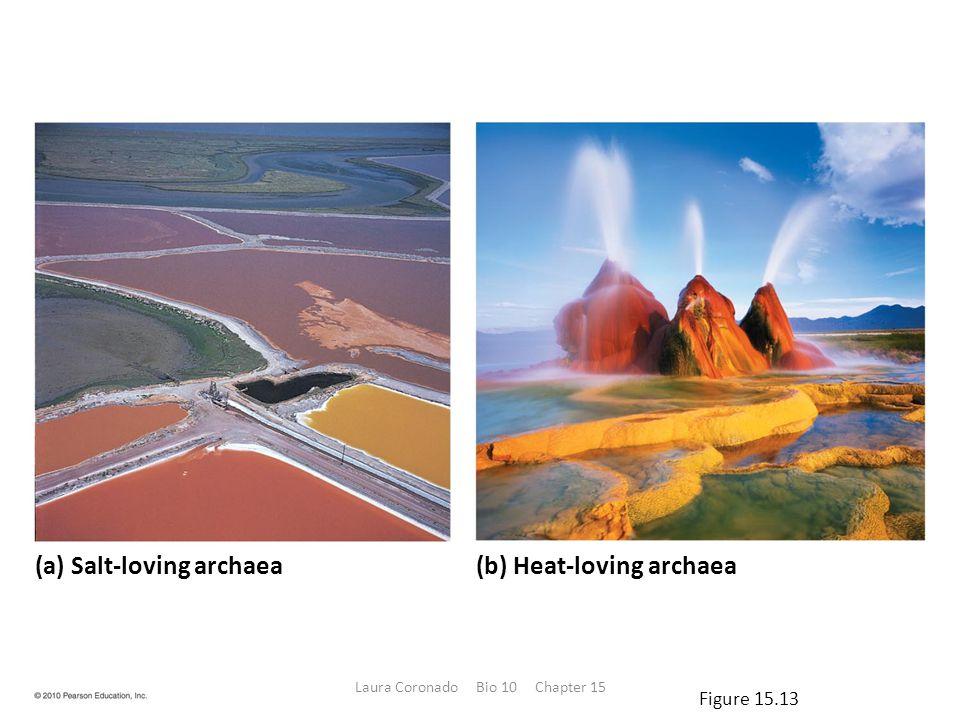(a) Salt-loving archaea(b) Heat-loving archaea Figure 15.13 Laura Coronado Bio 10 Chapter 15