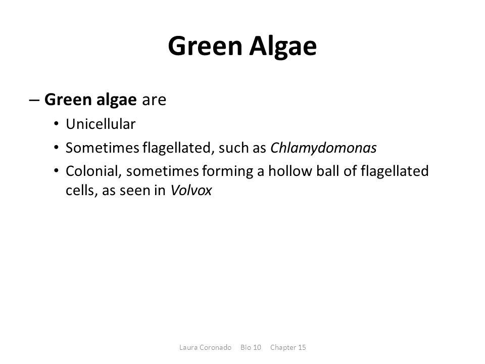 Green Algae – Green algae are Unicellular Sometimes flagellated, such as Chlamydomonas Colonial, sometimes forming a hollow ball of flagellated cells, as seen in Volvox Laura Coronado Bio 10 Chapter 15