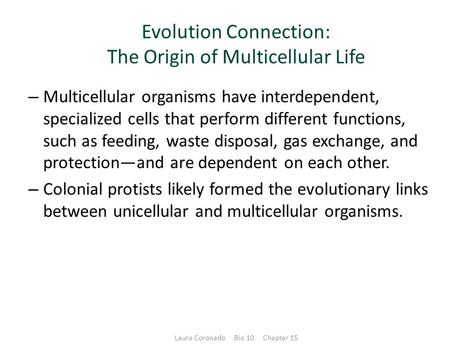 Evolution Connection: The Origin of Multicellular Life – Multicellular organisms have interdependent, specialized cells that perform different functions, such as feeding, waste disposal, gas exchange, and protection—and are dependent on each other.