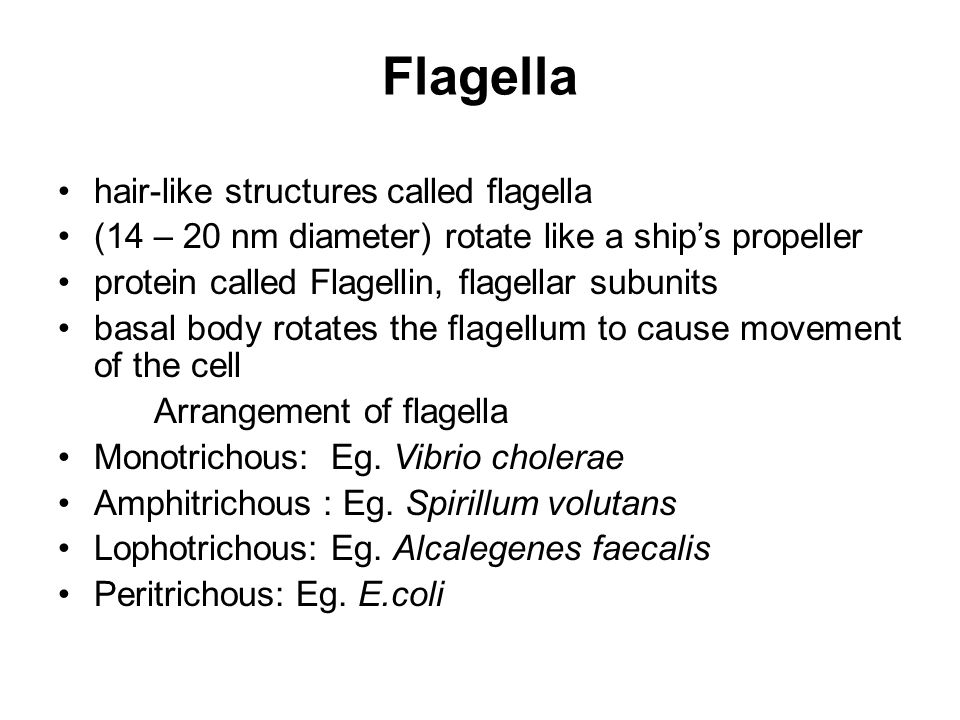 Flagella hair-like structures called flagella (14 – 20 nm diameter) rotate like a ship's propeller protein called Flagellin, flagellar subunits basal body rotates the flagellum to cause movement of the cell Arrangement of flagella Monotrichous: Eg.