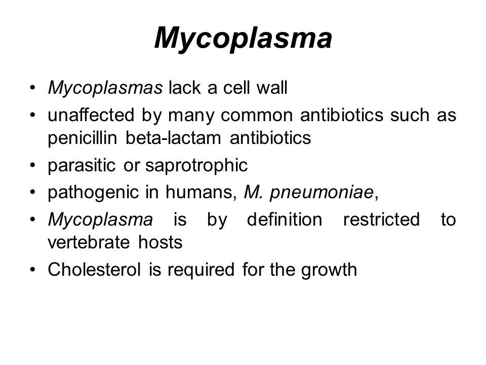 Mycoplasma Mycoplasmas lack a cell wall unaffected by many common antibiotics such as penicillin beta-lactam antibiotics parasitic or saprotrophic pathogenic in humans, M.