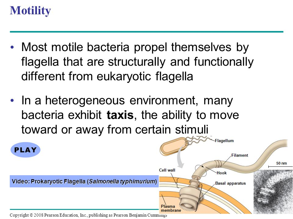 Copyright © 2008 Pearson Education, Inc., publishing as Pearson Benjamin Cummings Motility Most motile bacteria propel themselves by flagella that are