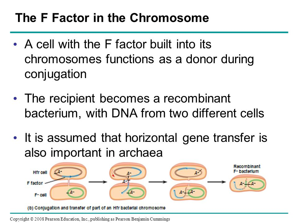 Copyright © 2008 Pearson Education, Inc., publishing as Pearson Benjamin Cummings The F Factor in the Chromosome A cell with the F factor built into i