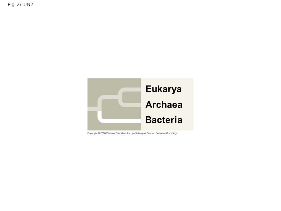 Fig. 27-UN2 Eukarya Archaea Bacteria