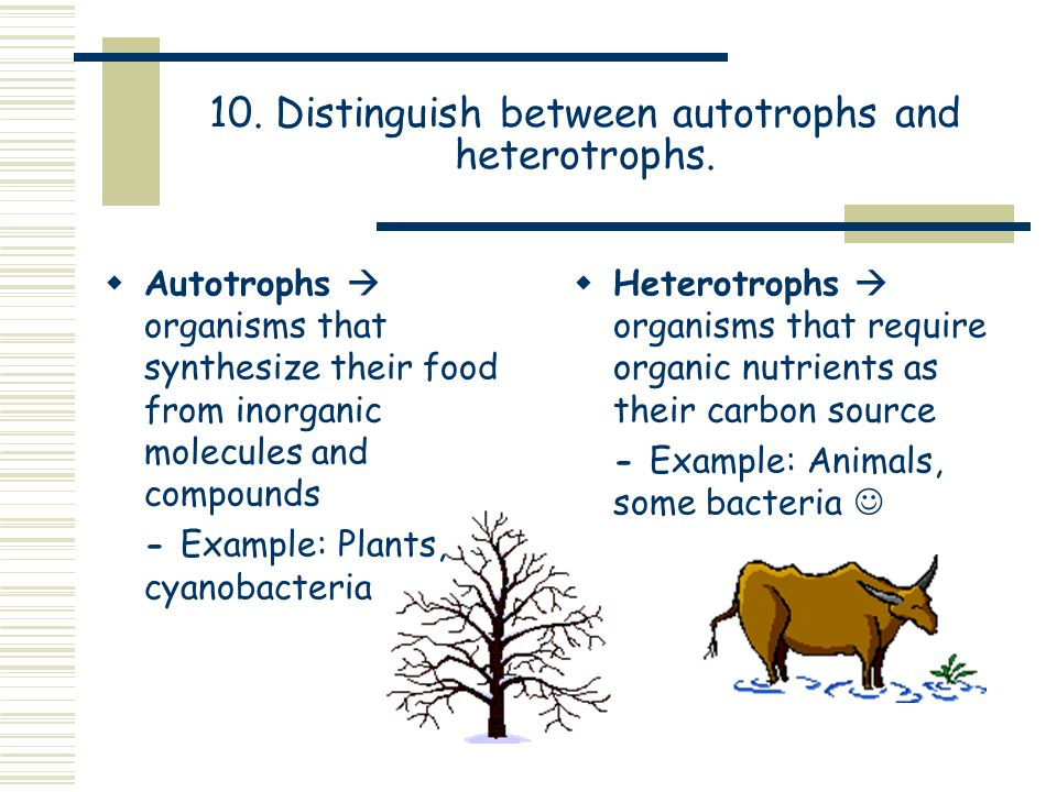 10. Distinguish between autotrophs and heterotrophs.