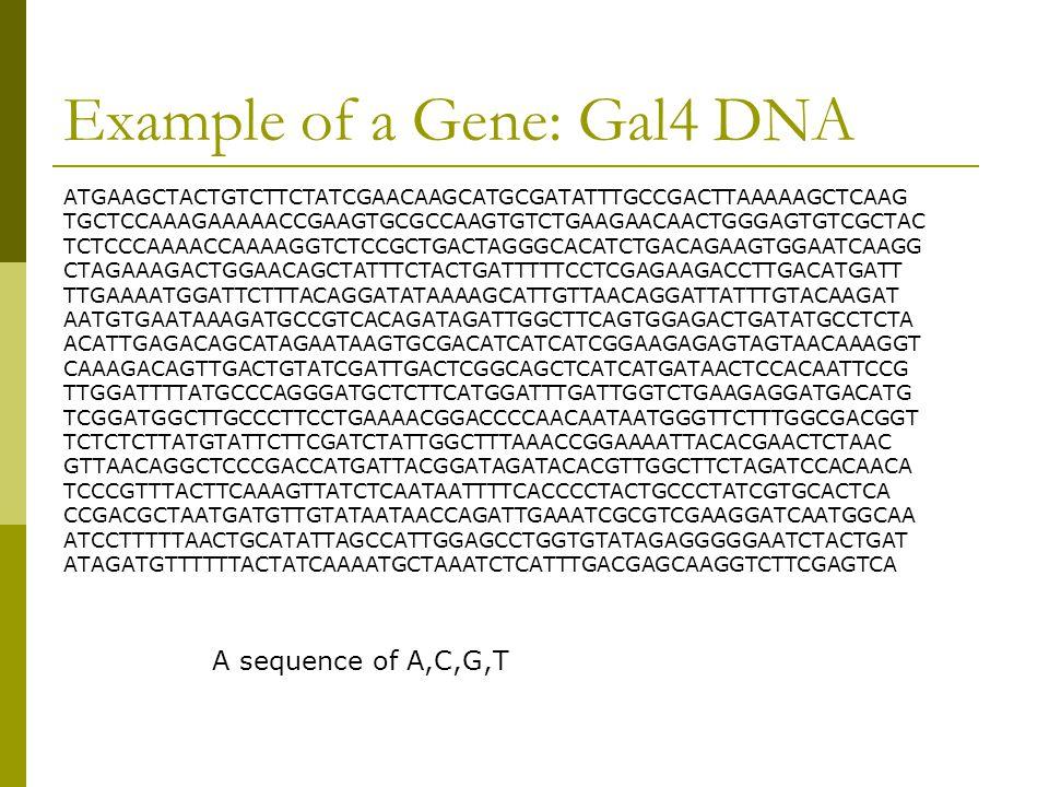 Example of a Gene: Gal4 DNA ATGAAGCTACTGTCTTCTATCGAACAAGCATGCGATATTTGCCGACTTAAAAAGCTCAAG TGCTCCAAAGAAAAACCGAAGTGCGCCAAGTGTCTGAAGAACAACTGGGAGTGTCGCTAC TCTCCCAAAACCAAAAGGTCTCCGCTGACTAGGGCACATCTGACAGAAGTGGAATCAAGG CTAGAAAGACTGGAACAGCTATTTCTACTGATTTTTCCTCGAGAAGACCTTGACATGATT TTGAAAATGGATTCTTTACAGGATATAAAAGCATTGTTAACAGGATTATTTGTACAAGAT AATGTGAATAAAGATGCCGTCACAGATAGATTGGCTTCAGTGGAGACTGATATGCCTCTA ACATTGAGACAGCATAGAATAAGTGCGACATCATCATCGGAAGAGAGTAGTAACAAAGGT CAAAGACAGTTGACTGTATCGATTGACTCGGCAGCTCATCATGATAACTCCACAATTCCG TTGGATTTTATGCCCAGGGATGCTCTTCATGGATTTGATTGGTCTGAAGAGGATGACATG TCGGATGGCTTGCCCTTCCTGAAAACGGACCCCAACAATAATGGGTTCTTTGGCGACGGT TCTCTCTTATGTATTCTTCGATCTATTGGCTTTAAACCGGAAAATTACACGAACTCTAAC GTTAACAGGCTCCCGACCATGATTACGGATAGATACACGTTGGCTTCTAGATCCACAACA TCCCGTTTACTTCAAAGTTATCTCAATAATTTTCACCCCTACTGCCCTATCGTGCACTCA CCGACGCTAATGATGTTGTATAATAACCAGATTGAAATCGCGTCGAAGGATCAATGGCAA ATCCTTTTTAACTGCATATTAGCCATTGGAGCCTGGTGTATAGAGGGGGAATCTACTGAT ATAGATGTTTTTTACTATCAAAATGCTAAATCTCATTTGACGAGCAAGGTCTTCGAGTCA A sequence of A,C,G,T