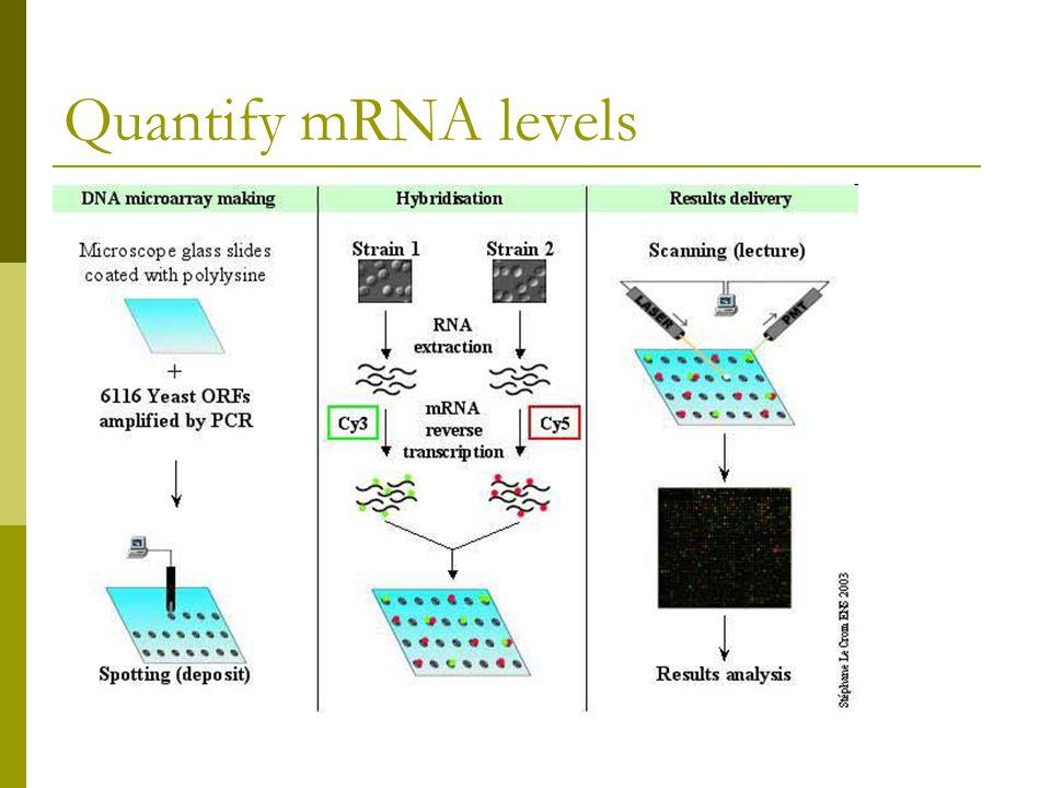 Quantify mRNA levels