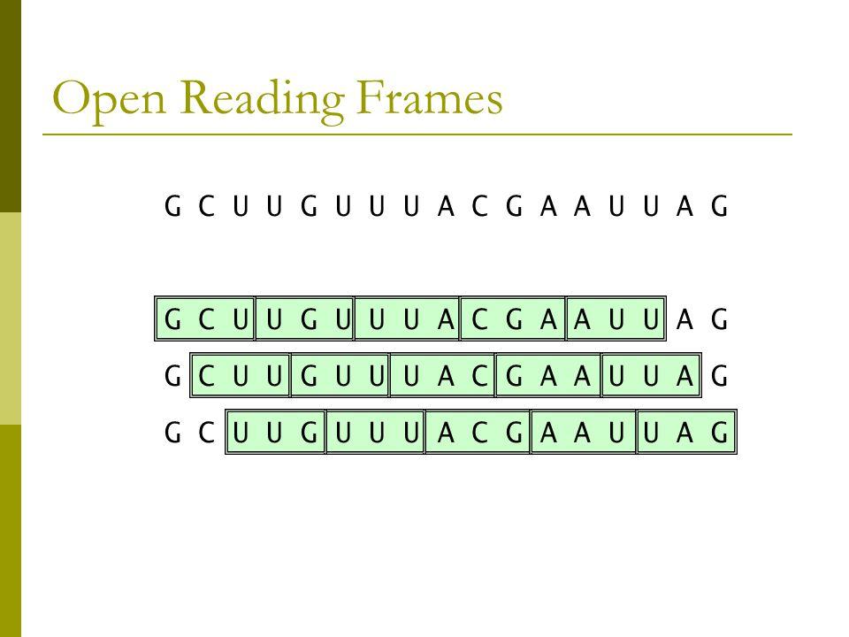 Open Reading Frames G C U U G U U U A C G A A U U A G