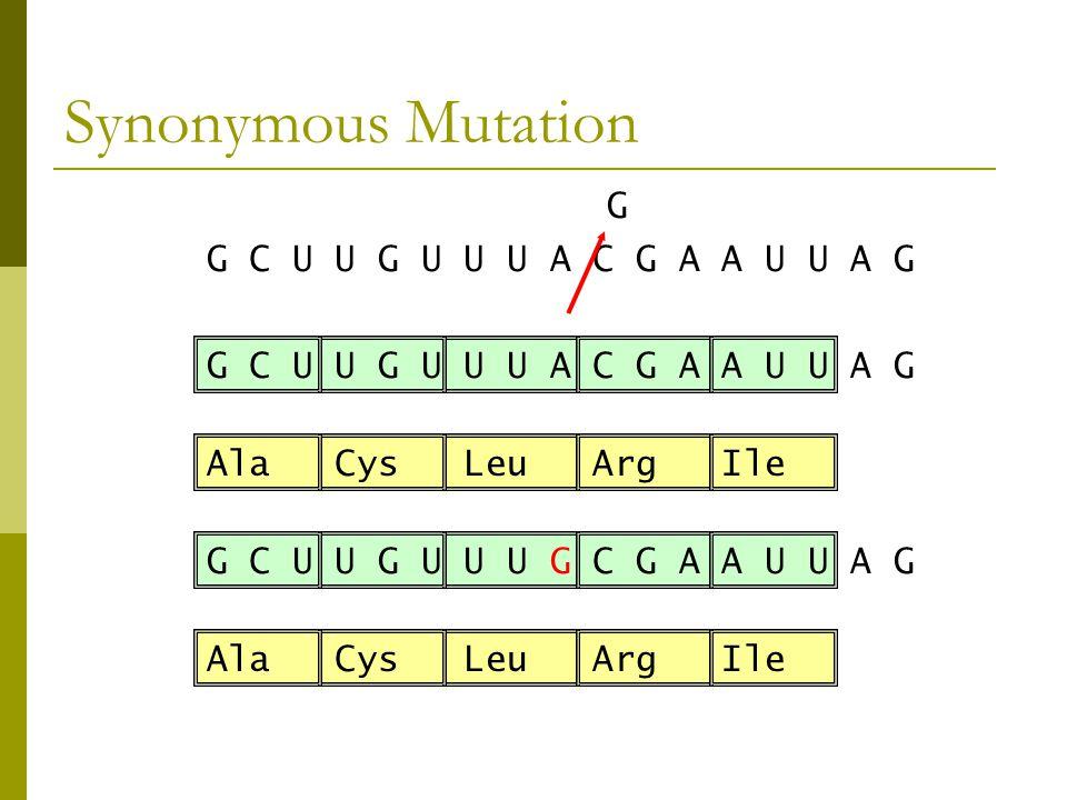 Synonymous Mutation G C U U G U U U A C G A A U U A G Ala Cys Leu Arg Ile G C U U G U U U A C G A A U U A G G G C U U G U U U G C G A A U U A G Ala Cys Leu Arg Ile