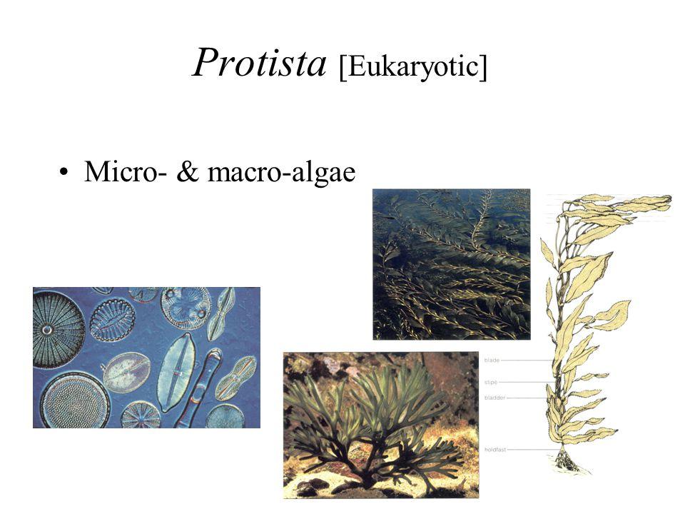Protista [Eukaryotic] Micro- & macro-algae