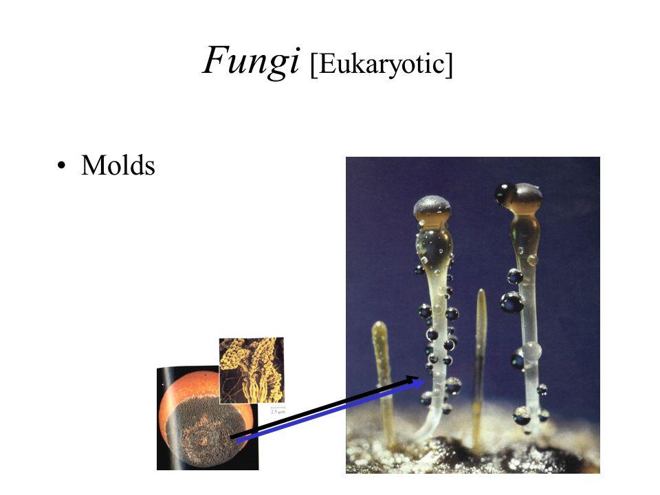 Fungi [Eukaryotic] Molds