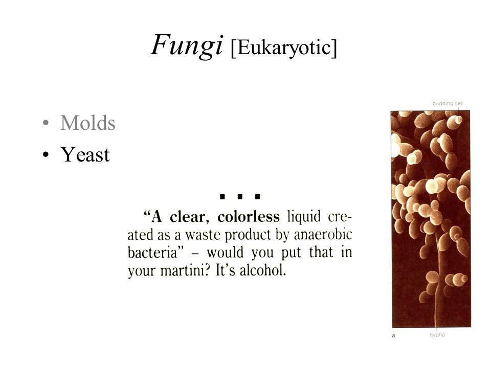 Fungi [Eukaryotic] Molds Yeast