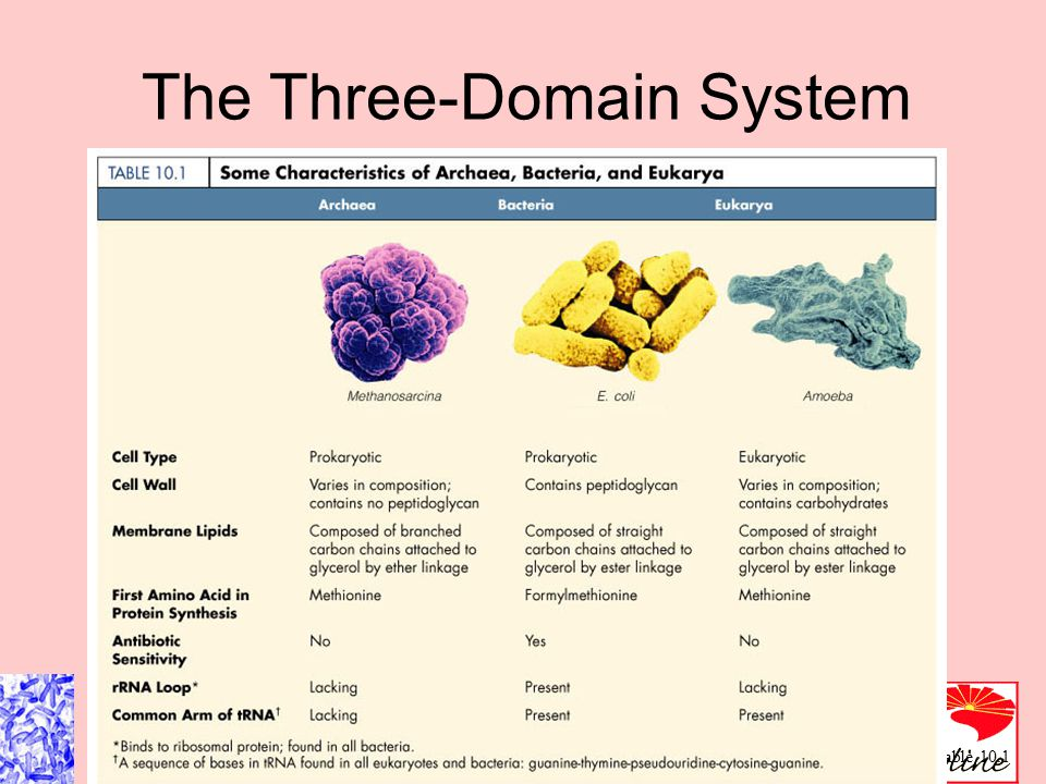 Figure 10.1 The Three-Domain System