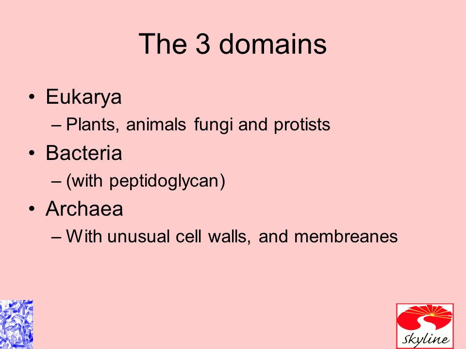 The 5 Kingdoms based on nutrient procurement Plantae –Multicellular photoautotrophs Animalia –ingestive Fungi –absorptive Protozoa –Mostly singe celled Prokaryotes Which of these are microbes?