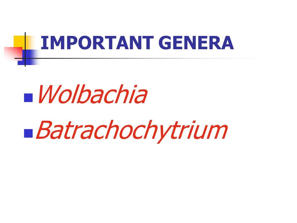 IMPORTANT GENERA Wolbachia Batrachochytrium
