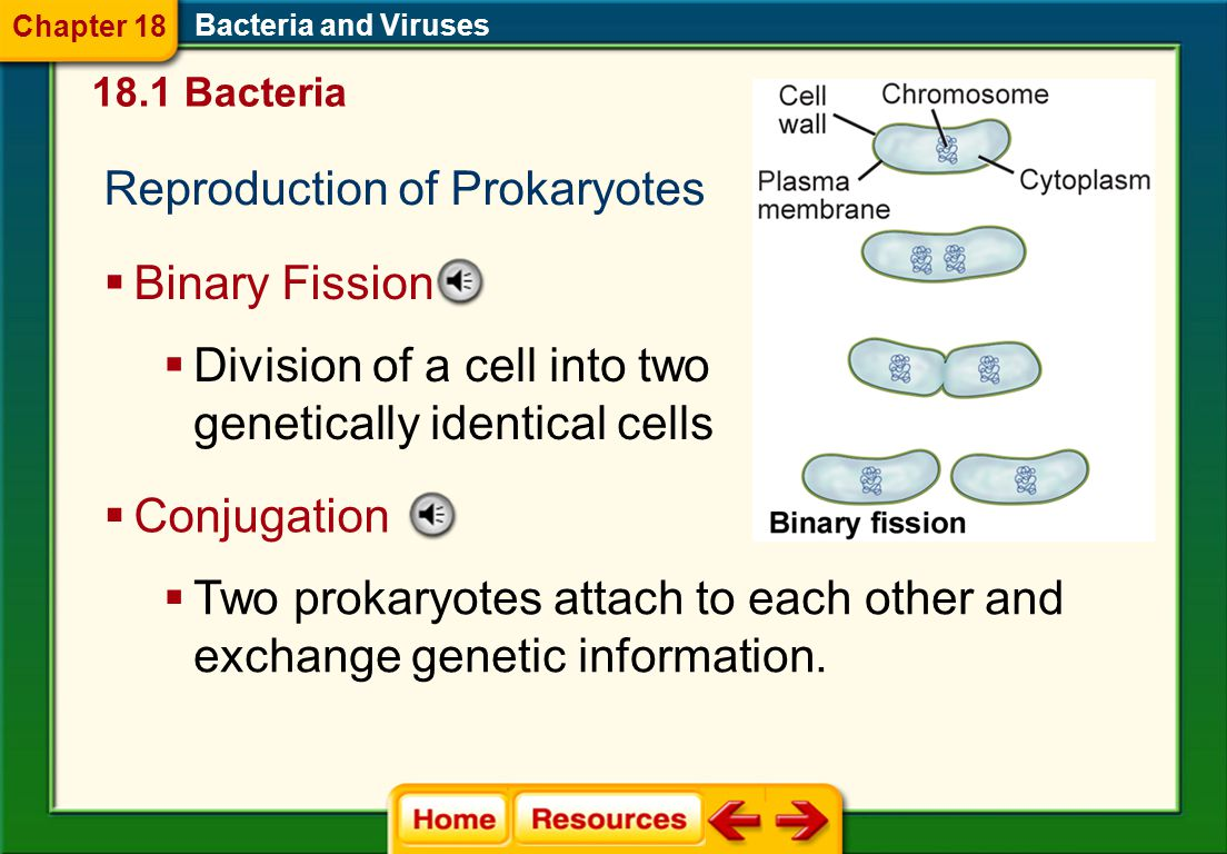 Movement Bacteria and Viruses  Prokaryotic flagella are made of filaments.  Flagella help prokaryotes to move toward materials that they need to sur