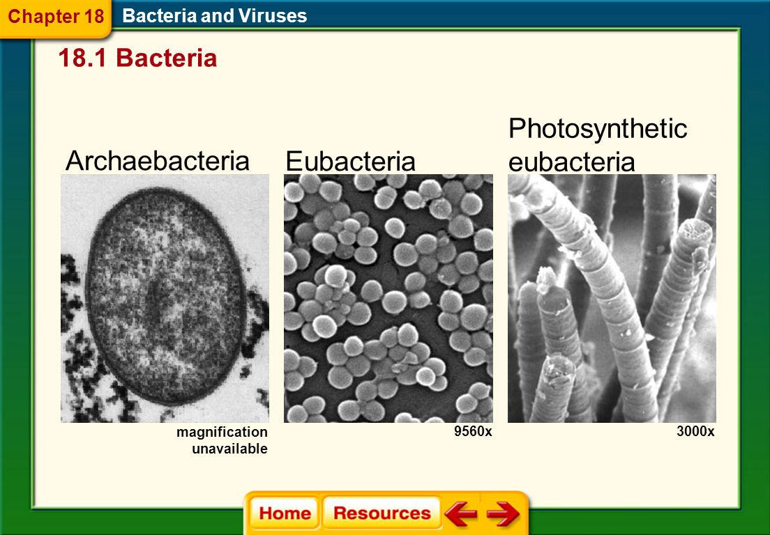 1.A 2.B 3.C 4.D CDQ 2 Bacteria and Viruses Chapter 18 Chapter Diagnostic Questions Name the structures on the outer surface of a bacterium that serve as a bridge between cells.