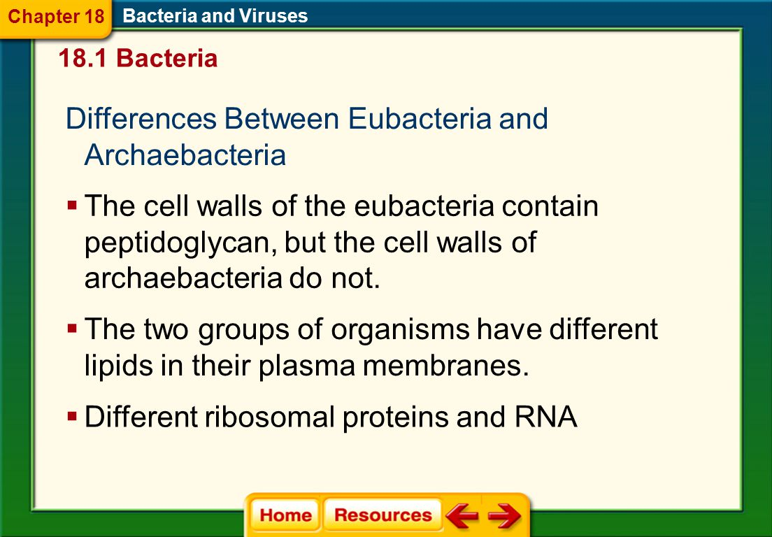 Differences Between Eubacteria and Archaebacteria Bacteria and Viruses  The cell walls of the eubacteria contain peptidoglycan, but the cell walls of archaebacteria do not.