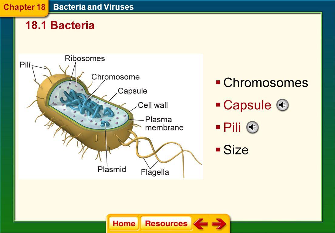  Chromosomes Bacteria and Viruses  Capsule  Pili  Size 18.1 Bacteria Chapter 18