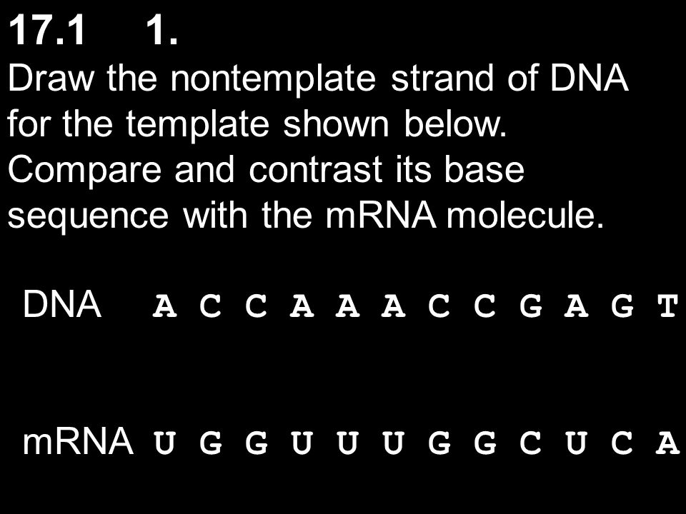17.11.Draw the nontemplate strand of DNA for the template shown below.