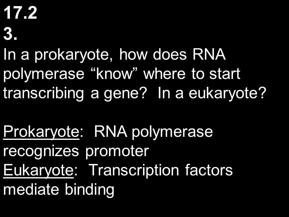 """17.2 3. In a prokaryote, how does RNA polymerase """"know"""" where to start transcribing a gene? In a eukaryote? Prokaryote: RNA polymerase recognizes prom"""