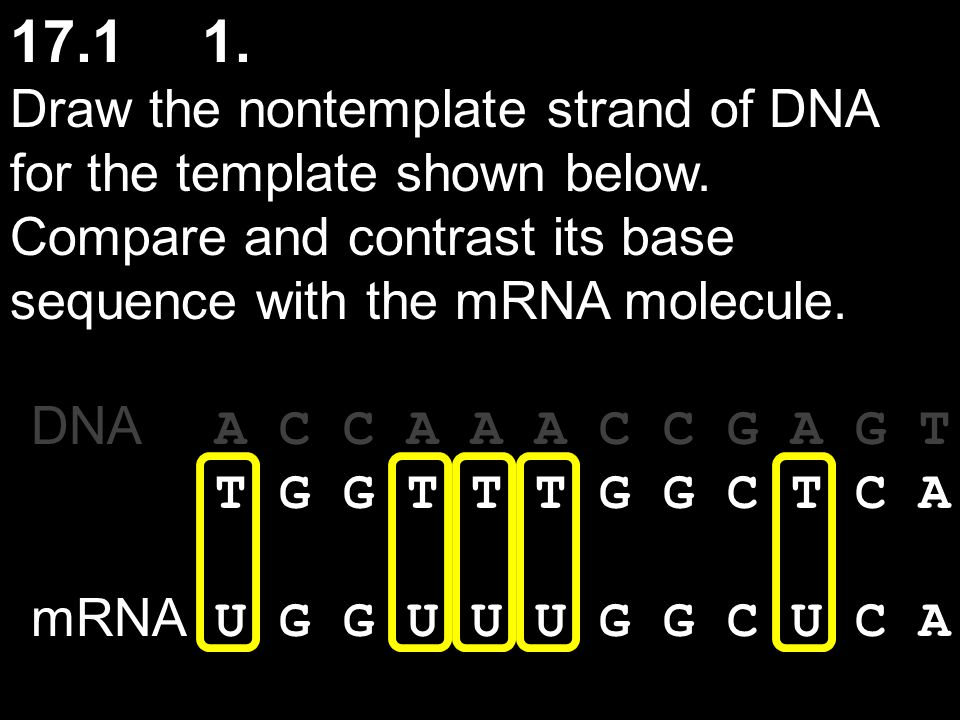 17.1 2.What protein product would you expect from a poly-G mRNA that is 30 nucleotides long.