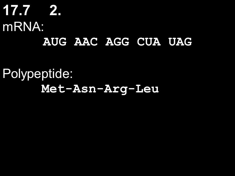 17.72. mRNA: AUG AAC AGG CUA UAG Polypeptide: Met-Asn-Arg-Leu
