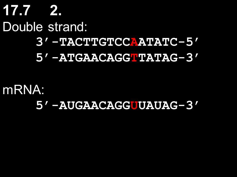 17.72. Double strand: 3'-TACTTGTCCAATATC-5' 5'-ATGAACAGGTTATAG-3' mRNA: 5'-AUGAACAGGUUAUAG-3'