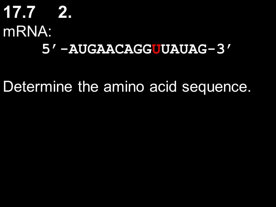 17.72. mRNA: 5'-AUGAACAGGUUAUAG-3' Determine the amino acid sequence.