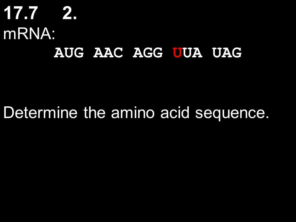 17.72. mRNA: AUG AAC AGG UUA UAG Determine the amino acid sequence.