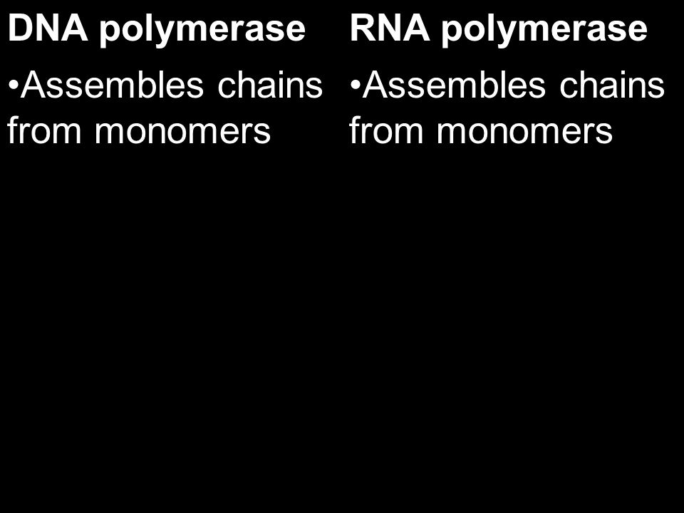 17.4 2. Describe how the formation of polyribosomes can benefit the cell.