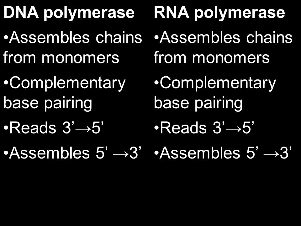 DNA polymerase Needs a primer RNA polymerase Can start from scratch