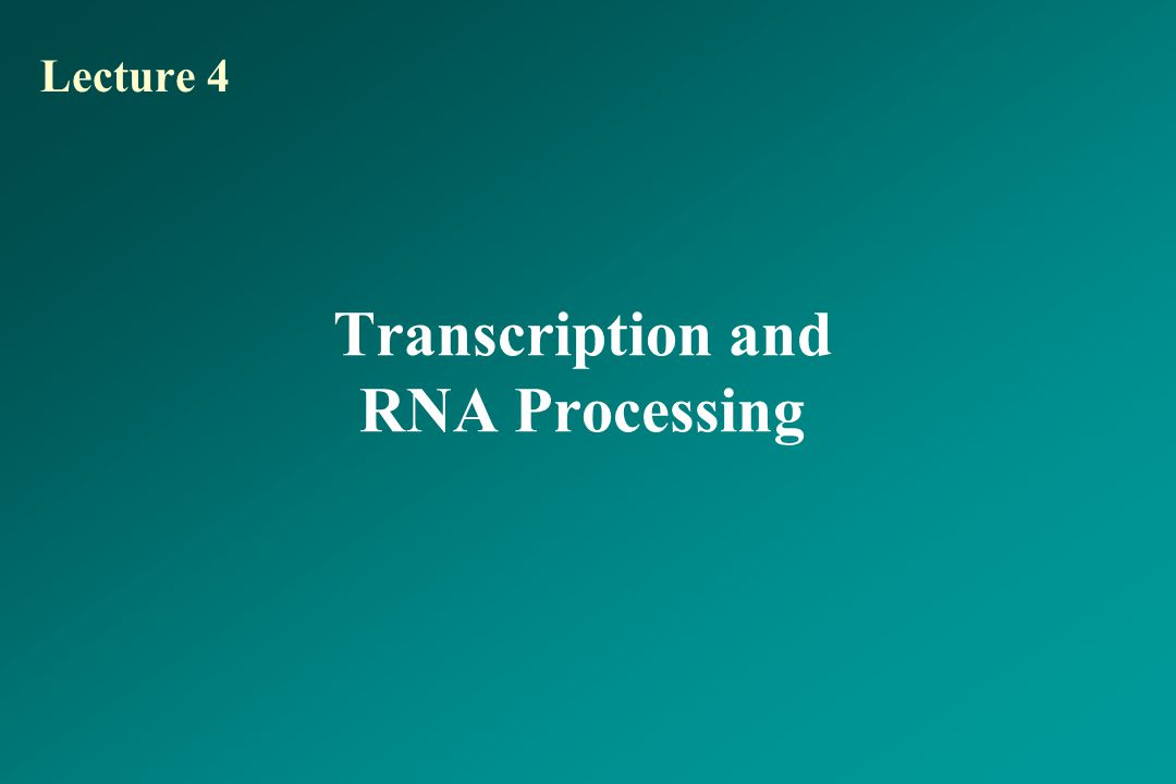 Transcription and RNA Processing Lecture 4