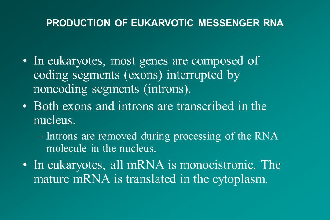 In eukaryotes, most genes are composed of coding segments (exons) interrupted by noncoding segments (introns). Both exons and introns are transcribed