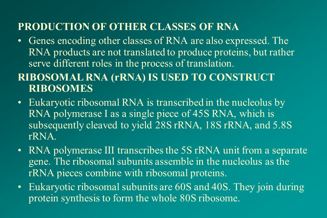 PRODUCTION OF OTHER CLASSES OF RNA Genes encoding other classes of RNA are also expressed. The RNA products are not translated to produce proteins, bu