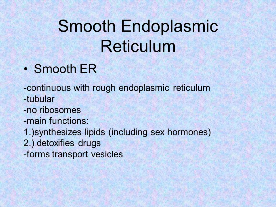Smooth Endoplasmic Reticulum Smooth ER -continuous with rough endoplasmic reticulum -tubular -no ribosomes -main functions: 1.)synthesizes lipids (including sex hormones) 2.) detoxifies drugs -forms transport vesicles