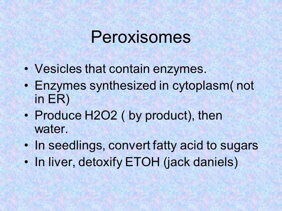 Peroxisomes Vesicles that contain enzymes.