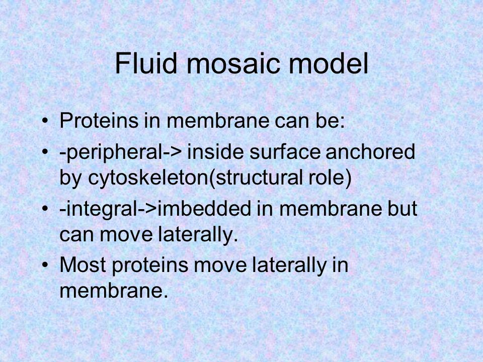 Fluid mosaic model Proteins in membrane can be: -peripheral-> inside surface anchored by cytoskeleton(structural role) -integral->imbedded in membrane but can move laterally.
