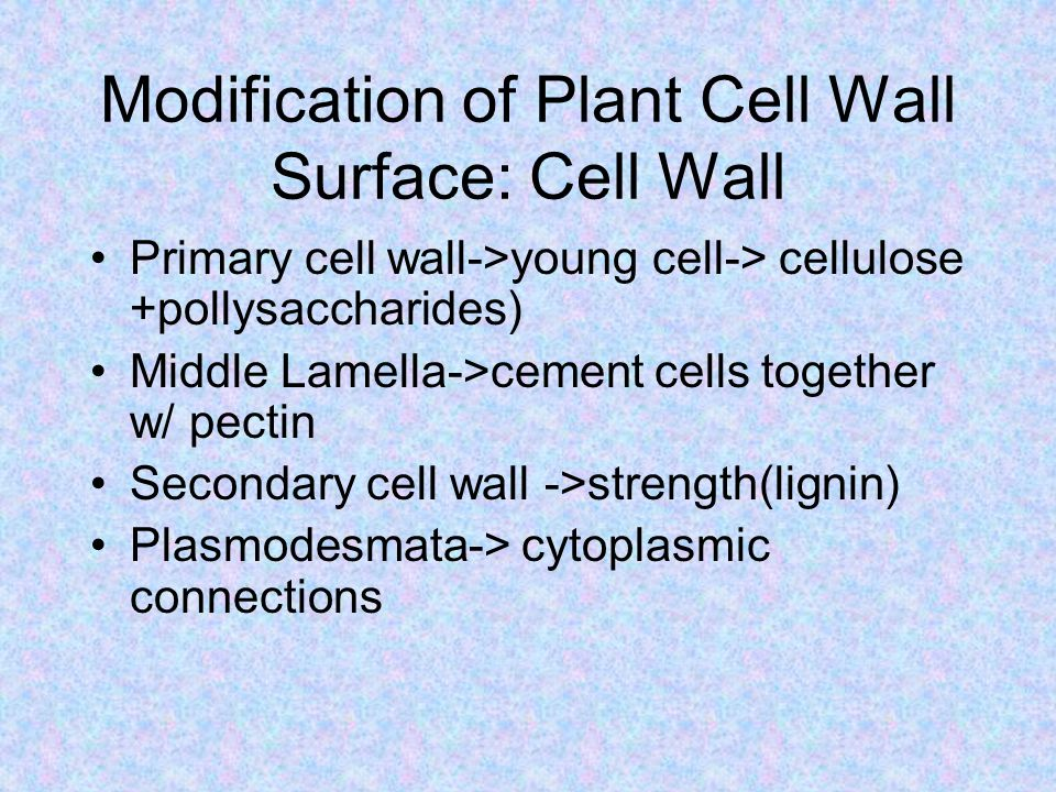 Modification of Plant Cell Wall Surface: Cell Wall Primary cell wall->young cell-> cellulose +pollysaccharides) Middle Lamella->cement cells together w/ pectin Secondary cell wall ->strength(lignin) Plasmodesmata-> cytoplasmic connections