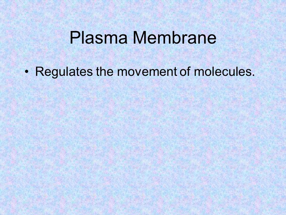 Plasma Membrane Regulates the movement of molecules.