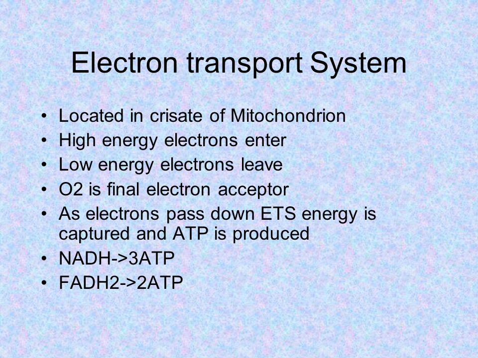 Electron transport System Located in crisate of Mitochondrion High energy electrons enter Low energy electrons leave O2 is final electron acceptor As electrons pass down ETS energy is captured and ATP is produced NADH->3ATP FADH2->2ATP